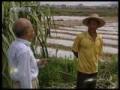 适量施用钾肥促甘蔗增产 (750播放)